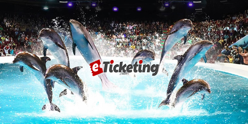 Dolphin and Seal Show