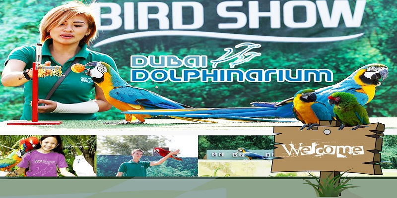 Creek Park Bird Show Tickets