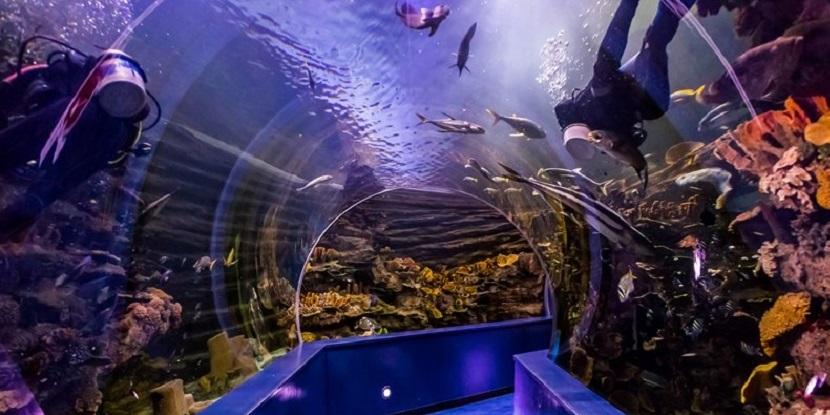 Sharjah Aquarium Tickets