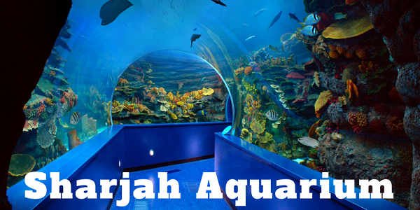 Sharjah Aquarium Tour Tickets